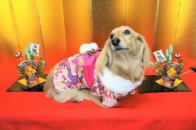 お正月犬.jpg